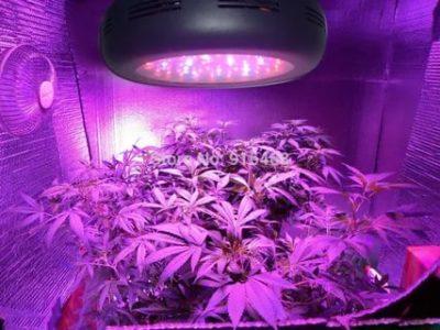 Как выращивают светодиоды