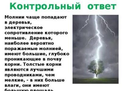 Какие виды деревьев притягивают молнию