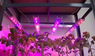Какие лампы лучше использовать для растений