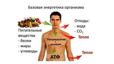 Как вырабатывается энергия в организме человека